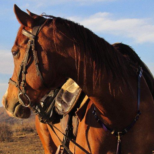 cheval dans le bush namibien